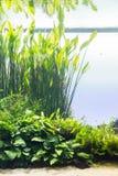 Aquarium mit Wasserpflanze und Tieren stockbild