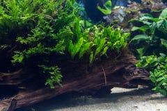 Aquarium mit Wasserpflanze und Tieren stockbilder
