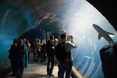 Aquarium on the modern zoo stylized to Africa. WROCLAW, POLAND - OCTOBER 22, 2016: Aquarium on the modern zoo stylized to Africa  Africarium in Wroclaw, Poland Royalty Free Stock Image