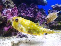 Aquarium 3 Stock Photos
