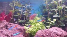 Aquarium. My aquarium @ home stock images