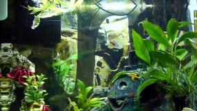 Aquarium with neons stock video