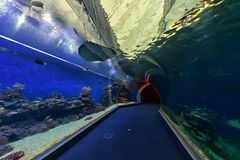 Aquarium observatory. Shark pool of Coral World in the Underwater Observatory in Eilat, Israel Royalty Free Stock Photo