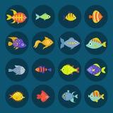 Aquarium ocean fish underwater bowl tropical aquatic animals water nature pet characters vector illustration. Beautiful swim freshwater nautical seaside Stock Image
