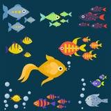 Aquarium ocean fish underwater bowl tropical aquatic animals water nature pet characters vector illustration. Beautiful swim freshwater nautical seaside Royalty Free Stock Images