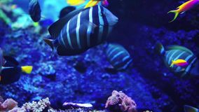 Aquarium or oceanarium, fish tank, coral reef, animals. Aquarium or oceanarium, fish tank, coral reef, animals stock footage
