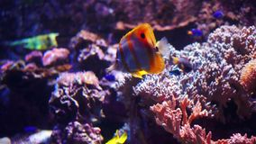 Aquarium or oceanarium, fish tank, coral reef, animals. Aquarium or oceanarium, fish tank, coral reef, animals stock video