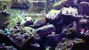 Aquarium or oceanarium, fish tank, coral reef, animals. Aquarium or oceanarium, fish tank, coral reef, animals stock video footage