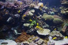 Aquarium in Oceanographic park in Valencia Stock Photo