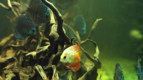 Aquarium. Old Trees in the Large Aquarium stock video footage