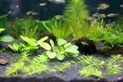 Aquarium onderwatertuin Stock Foto's