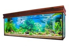 Aquarium op witte achtergrond Stock Afbeelding
