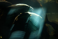 Aquarium optical effects. Fishes in the water Stock Images
