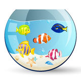 Aquarium with ornamental fishes Stock Image