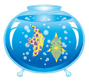 Aquarium with pair of exotic fish Stock Photography