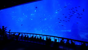 Aquarium and People Royalty Free Stock Photo