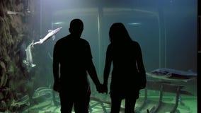 Aquarium. People watching underwater wildlife at the aquarium stock video