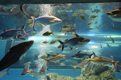 Aquarium. A picture of variety kinds of freshwater fish at Bueng Cha Wak aquarium, Suphanburi  province, Thailand Stock Photos