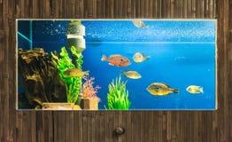 Aquarium. Plank framed aquarium with Cichlids stock image