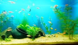 Aquarium planté par eau douce photo stock