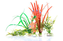 Aquarium plants Royalty Free Stock Photography