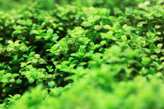 Aquarium plants Stock Photos
