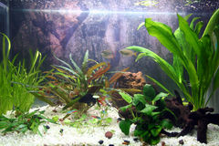 Aquarium plants Stock Image