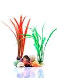 Aquarium plants and sea-shells Royalty Free Stock Images