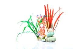 Aquarium plants and sea-shells Royalty Free Stock Image