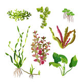 Aquarium plants set. Cartoon underwater algae. Seaweed natural elements. Decoration grass for fish tanks and terrariums. Ocean flora. Aquatic life. Branches Stock Images