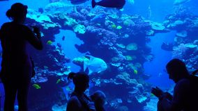 Aquarium with plants and tropical colorful fishes. PALMA DE MALLORCA, SPAIN - SEPTEMBER 15, 2017: Silhouettes of visitors against the big aquarium. Aquarium with stock video
