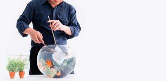 Aquarium pour l'animal familier et le passe-temps à la maison photo stock