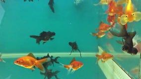 Aquarium relaxing fish swimming in the water meditation stock video