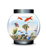Aquarium rond Photographie stock libre de droits