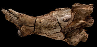 Aquarium Root. (Driftwood) are hand-picked roots for aquarium Royalty Free Stock Photography