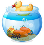 An aquarium with a rubber duck Royalty Free Stock Image