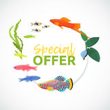 Aquarium sale banner, sticker with place for text. Cartoon flat aquarium banners with fish  vector illustration Stock Image