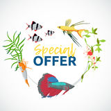 Aquarium sale banner, sticker with place for text. Cartoon flat aquarium banners with fish  vector illustration Stock Photography