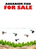 Aquarium for sale Stock Photography