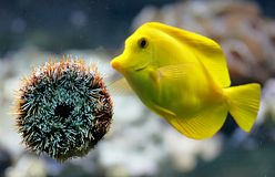 Aquarium scene 2 Stock Photography