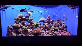 Aquarium scene Stock Photos