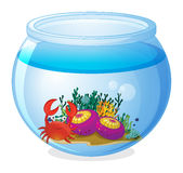 An aquarium with sea creatures Royalty Free Stock Photography