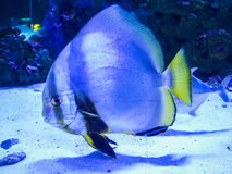 Aquarium sea fish Royalty Free Stock Photo
