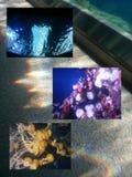 AQUARIUM. Sea life behind glass walls Stock Photo