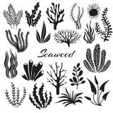 Aquarium seaweeds. Underwater plants, ocean planting. Vector seaweed black silhouette isolated set. Sea weed black, underwater sea ocean plant illustration royalty free illustration