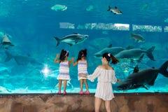 Aquarium Sentosa, Singapour de mer d'underwarer de Singapour, le 14 avril, photo stock