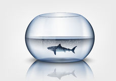 Aquarium with shark. Aggression, vector, swimming eps10 Stock Photography