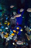 Aquarium show Stock Photo
