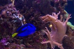 Japan aquarium showcase at Akita Stock Photo