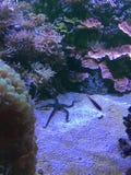 Underwater. Aquarium sight seeing Stock Images